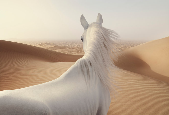 White Horse par Andy Glass
